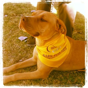 Bark For Life photo 2